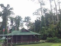 Rainforestupptäcktmitten RDC är nyckeln till att få veta unikheten och betydelsen av Borneo's rainforests fotografering för bildbyråer