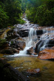 rainforestvattenfall Royaltyfri Foto