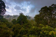Rainforestwiew från markisen går tornet i Sepilok, Borneo Arkivfoto