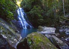 Rainforrest瀑布 库存图片