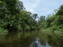 Rainforrest french guyane. River through rainforrest in french guyane Stock Images