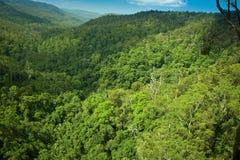 Rainforrest subtropical en parc national de Springbrook Image libre de droits