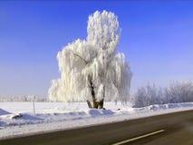 Rainha da neve no campo pela estrada fotos de stock royalty free