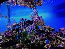 Rainha do aquário Fotos de Stock Royalty Free