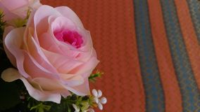 A rainha do hybrida de Rosa da flor aumentou fotografia de stock