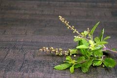 Rainha santamente da manjericão ou do Tulsi das ervas e do almofariz de madeira imagens de stock royalty free