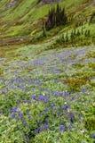 Rainier Alpine Wildflowers Stock Photos