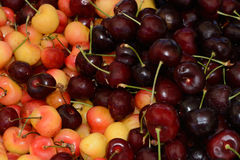 Rainier and bing cherries. In bin at farmer`s market Royalty Free Stock Photography
