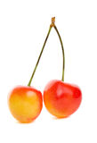 Rainier cherries Royalty Free Stock Images