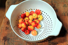 Rainier Cherries. A white colander containing some Rainier cherries rests on a rustic wooden bench Royalty Free Stock Image