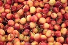 Rainier Cherries. Bunch of fresh rainier cherries Stock Images