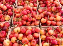 Rainier cherries. Punnets of Rainier cherries at the farmers market stock photos