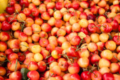 Rainier cherries Stock Photography