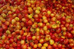Rainier cherries background. Pile of rainier cherries in market place Stock Images