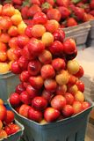 Rainier Cherries royalty free stock photos