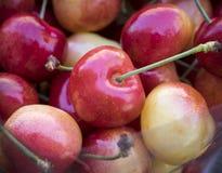 Rainier Cherries Stock Image