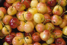 Rainier Cherries close-up. Close-up of freshly washed rainier cherries royalty free stock images