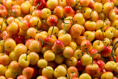 Rainier Cherries Closeup Photographie stock libre de droits