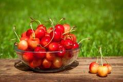 Rainier Cherries en un cuenco en hierba verde Imagen de archivo libre de regalías