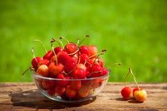 Rainier Cherries en un cuenco en hierba verde fotografía de archivo