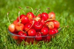 Rainier Cherries en un cuenco en hierba verde imágenes de archivo libres de regalías