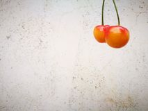 Rainier Cherries fruit lying on ground with different background Stock Photography