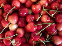 Rainier cherries, macro view Stock Images