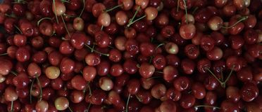 Rainier cherries, macro view royalty free stock image