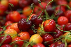 Rainier Cherries rouge et jaune coloré photo libre de droits