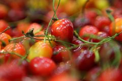Rainier Cherries rouge et jaune coloré image stock