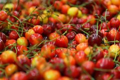 Rainier Cherries rouge et jaune coloré image libre de droits