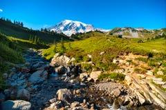 Rainier vista Royalty Free Stock Photo