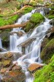 Rainier Waterfall Royalty Free Stock Photos