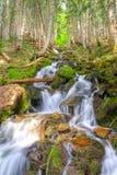 Rainier Waterfall Royalty Free Stock Images