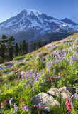 Rainier Wildflower Vantage Stock Image