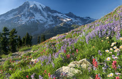 Rainier Wildflower Vantage Royalty Free Stock Photos