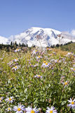 Rainier wildflowers Stock Image