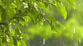 Raining on beautiful green plant in nature