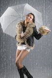 Raining cats and dogs Stock Photos