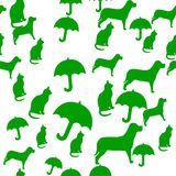 Raining Cats and Dogs Royalty Free Stock Photography