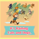Raining cats and dogs Royalty Free Stock Image