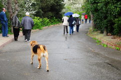 Raining day. Some people a dog walks under rain Royalty Free Stock Photo