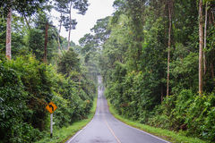 Raining day in the moutain,view of the road,Khao Yai in Nakhon Ratchasima Stock Image