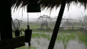 A raining day outside. in Rice Field during the raining season. rain and wind and noise and trees. stock video footage