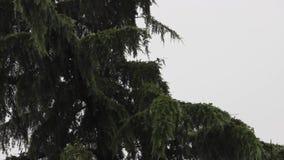 Raining day stock video footage