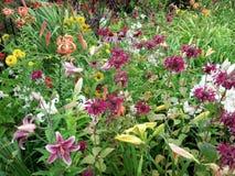 Raining on the flower garden Stock Photography