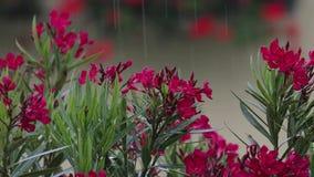 Raining on flowers stock video