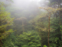 Raining forest. And trees with fog in central america Stock Photography