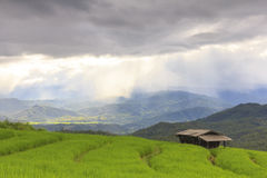Raining on green rice terrace field and cloudy sky. Royalty Free Stock Photo