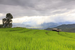 Raining on green rice terrace field and cloudy sky. Royalty Free Stock Photography